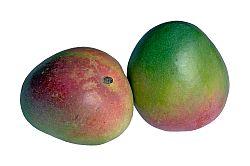 Mango baby food recipes